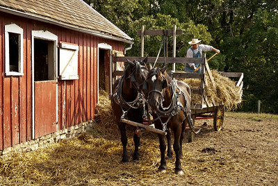 Here they are putting hay in the barn for the horses. It has been loaded and is being unloaded by hand, as it was in the 1900's