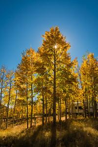 Fall-Aspen-9-26-2015-00084