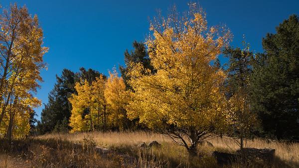 Fall-Aspen-9-26-2015-00094