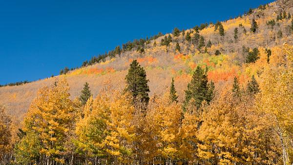 Fall-Aspen-9-26-2015-00110