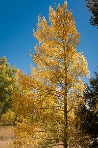 Fall-Aspen-9-26-2015-00090