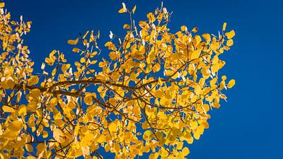 Fall-Aspen-9-26-2015-00092