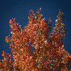 Aspens-CO-Along CO67-Red-05786