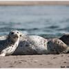 Seals in Lincoln City