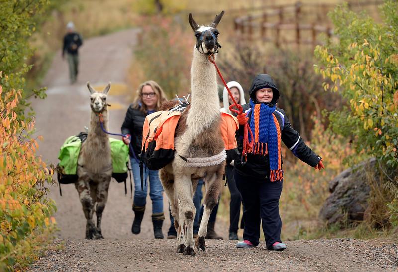 Llamas_JP10154
