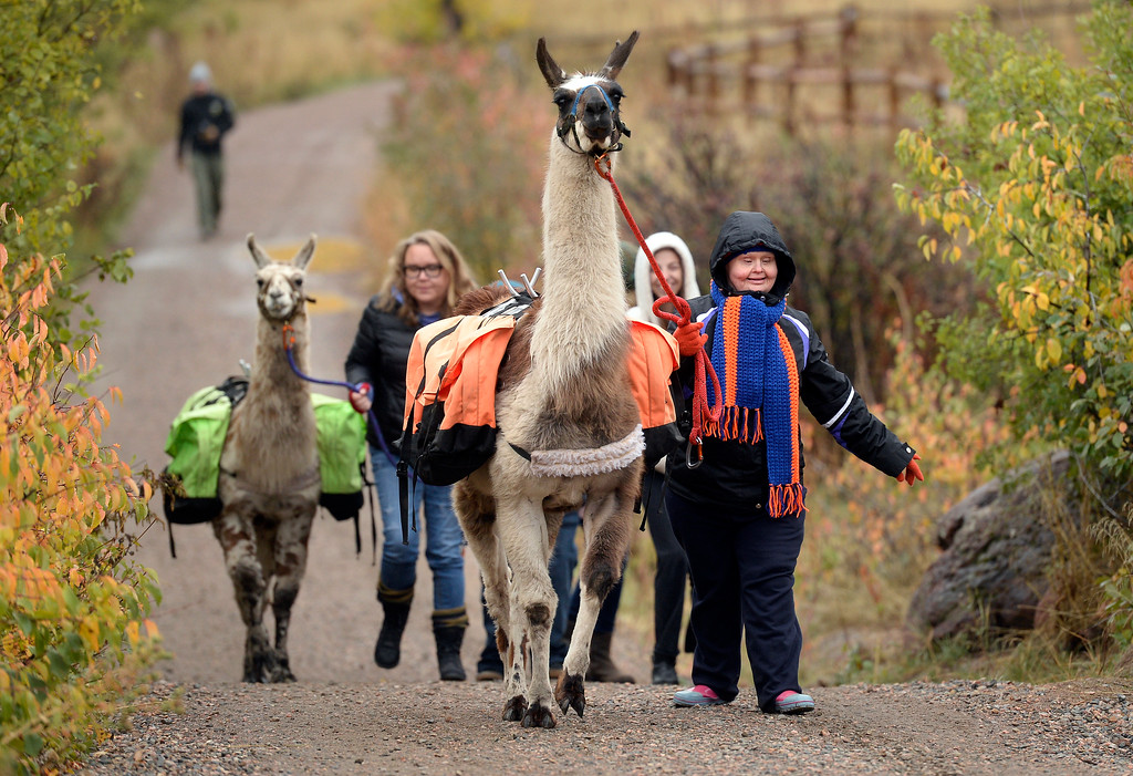 . BOULDER, CO - OCTOBER 9, 2018: Tracy Gendron walks with a llama on Tuesday at the Doudy Draw Trailhead in Boulder County. Boulder\'s Open Space and Mountain Parks, The Center for People with Disabilities, and Pack Animal Magazine teamed together to try to find a way to use the llamas to help people with disabilities access the backcountry trails. For more photos and video of the event go to dailycamera.com (Photo by Jeremy Papasso/Staff Photographer)