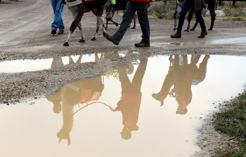 . BOULDER, CO - OCTOBER 9, 2018: People are reflected in a puddle as they walk with llamas on Tuesday at the Doudy Draw Trailhead in Boulder County. Boulder\'s Open Space and Mountain Parks, The Center for People with Disabilities, and Pack Animal Magazine teamed together to try to find a way to use the llamas to help people with disabilities access the backcountry trails. For more photos and video of the event go to dailycamera.com (Photo by Jeremy Papasso/Staff Photographer)