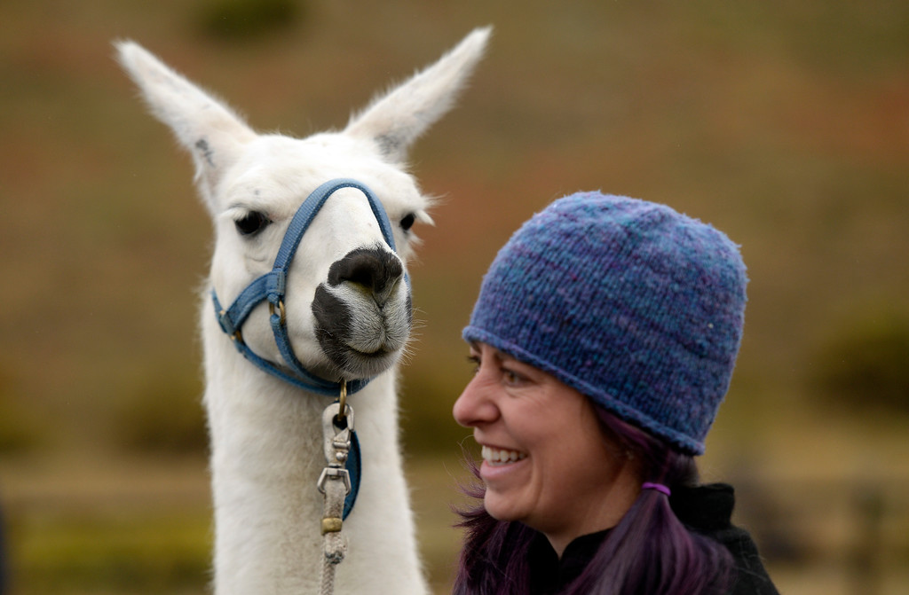 . BOULDER, CO - OCTOBER 9, 2018: A llama looks at Alexa Metrick, editor of Pack Animal Magazine, on Tuesday at the Doudy Draw Trailhead in Boulder County. Boulder\'s Open Space and Mountain Parks, The Center for People with Disabilities, and Pack Animal Magazine teamed together to try to find a way to use the llamas to help people with disabilities access the backcountry trails. For more photos and video of the event go to dailycamera.com (Photo by Jeremy Papasso/Staff Photographer)
