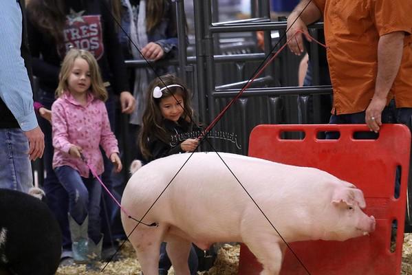 Sub Junior Swine
