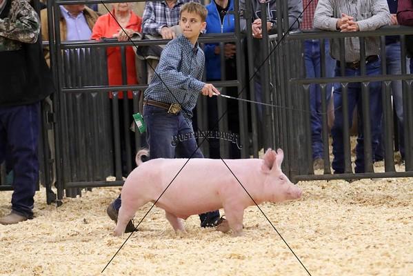 Swine III
