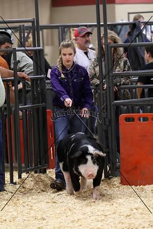 Swine IV
