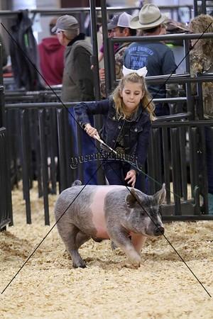 Swine V