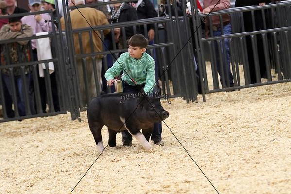 Swine VII