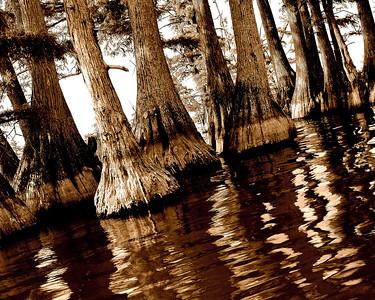 DSC_4653cypress reelfoot lake