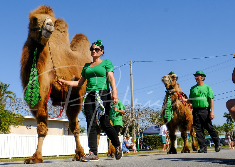 Camels and an Irish lass at the 20th Annual St Patricks Day parade in Holmes Beach, FL