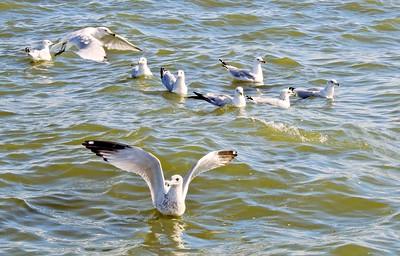 Carlyle Lake, Illinois