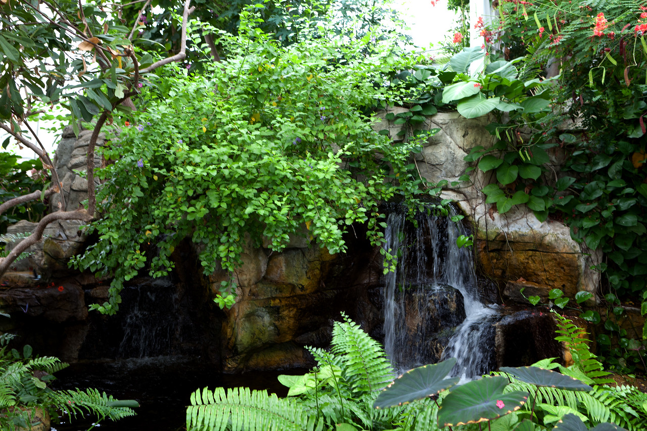 Springtime in St. Louis - Butterfly House & Forest Park
