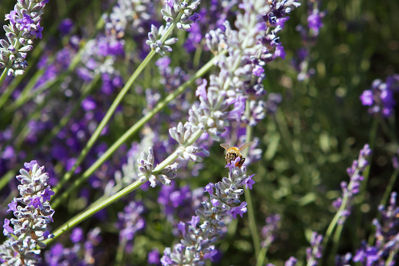 The bees love this place!