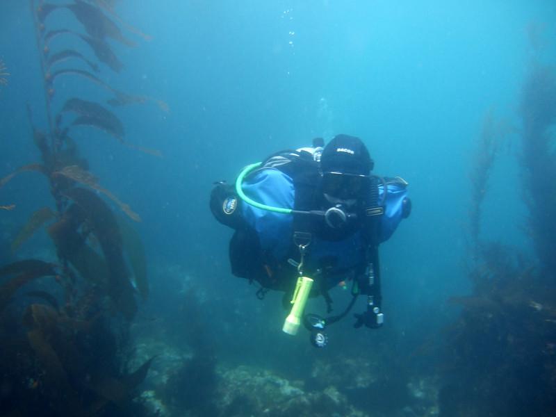 Ray swimming through the kelp