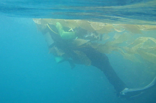 This diver apparently enjoyed the kelp so much he decided to bring some back to the boat with him
