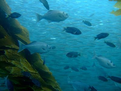 Fish freeway at Ship Rock