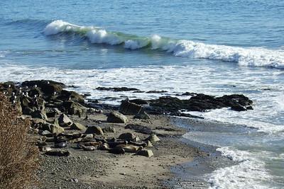 Carpinteria Bluffs Seal Sanctuary, 1/6/07