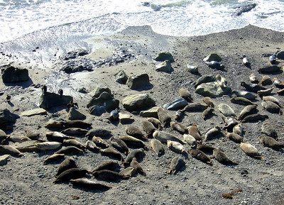 Harbor seal rookery – looks like they're enjoying the sunny day as much as we are