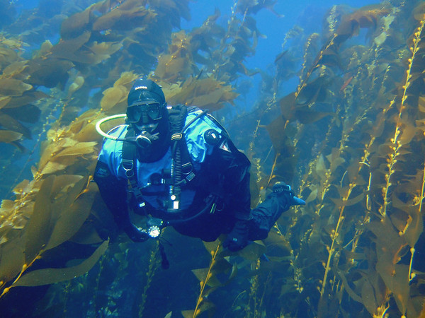 Ray in the kelp forest
