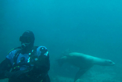 Sea lion sneaking up on Ray