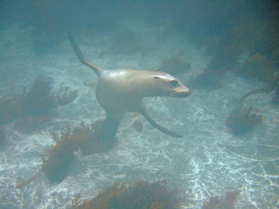 My camera lens was fogged for this pic, but the sea lion posed so nicely I had to keep him in the album