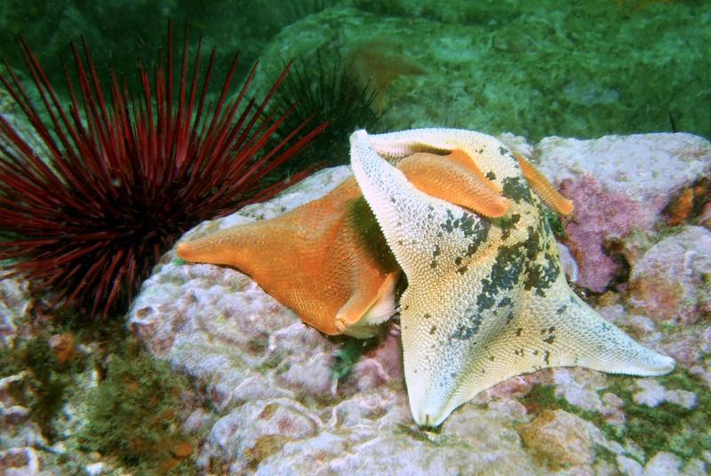Starfish embrace