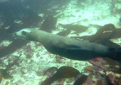 Torpedo swimmer