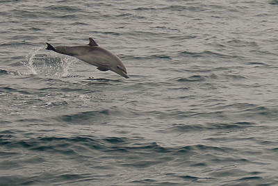 Baby dolphin away!