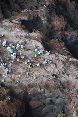 Flowers & lichens provide the color that gives Painted Cave its name