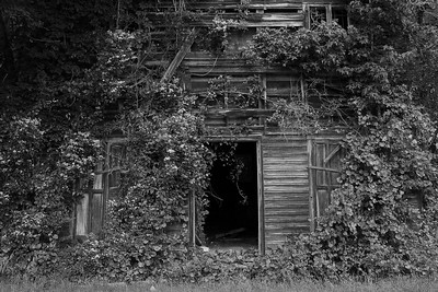 This old barn is almost totally engulfed in vines now...