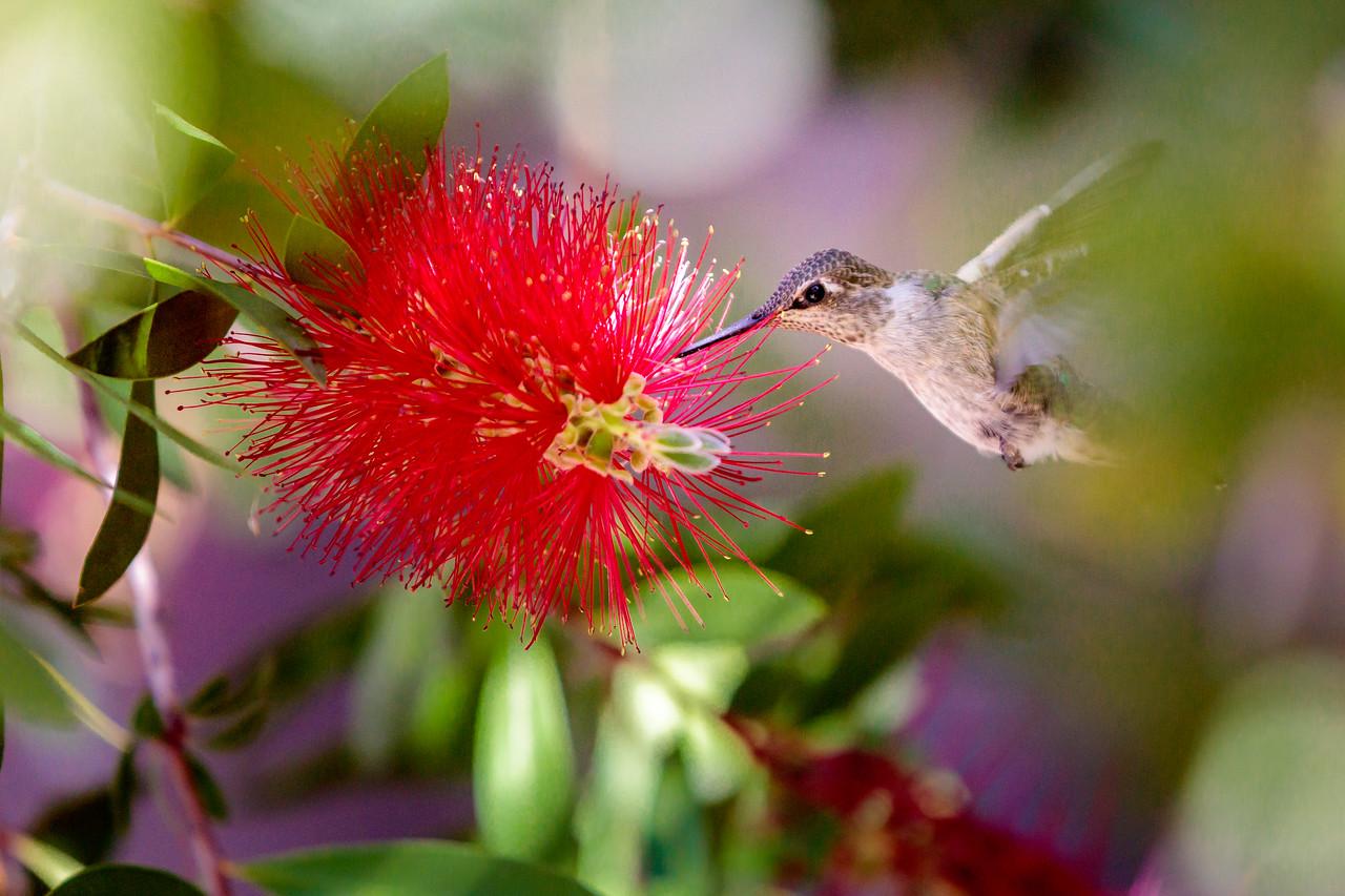 #spring #summer #hummingbird