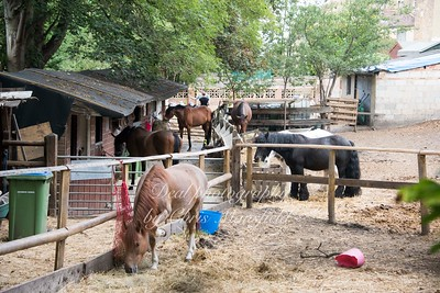 Stables near the nature reserve