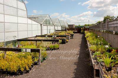 Plant sales area June 2011