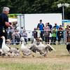 June 24th 2017 armed forces day geese