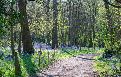 Lesness abbey woods 04