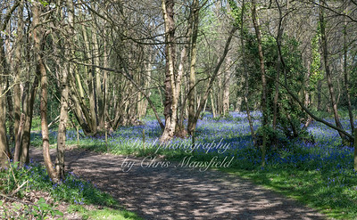 Lesness abbey woods 01