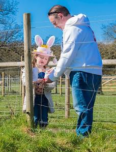 March 25th 2016 woodlands farm eggs CM 14
