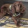 March 31st 2017 Sniffer dog mansfield 06