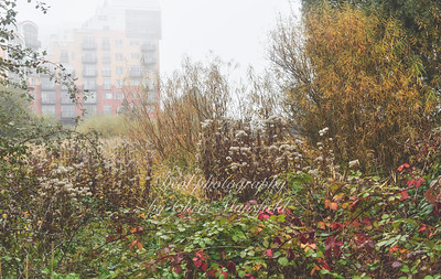 oct 30th 2016 Greenwich ecology park 12