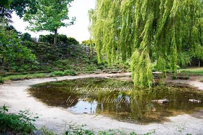 june 5th 2016 Rockliffe gardens 10