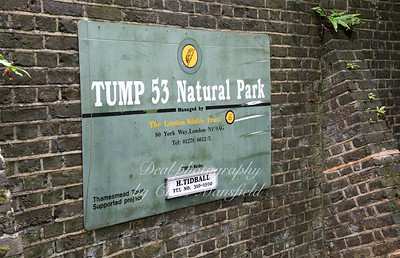 Sept 17th 2017 tump 53  10