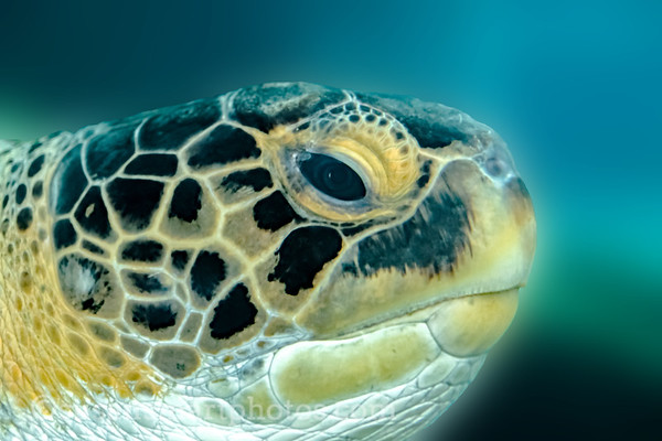Mote Marine Sea Turtle
