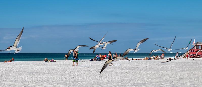 Siesta Public Beach