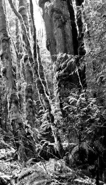 talus rocks, tiger mountain january 2009