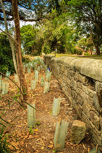 Stone wall behind the former Gladesville Mental Hospital.